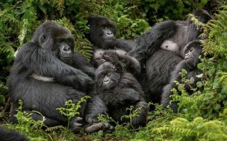 Buhoma Sector Gorillas