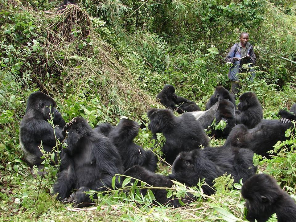 Gorilla Trekking Family in Rwanda