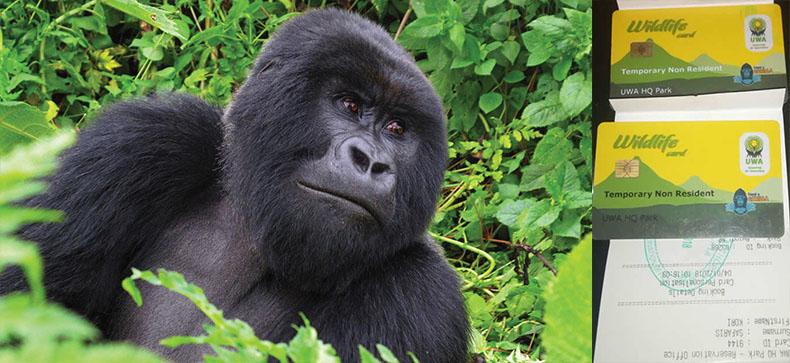 Gorilla Trekking Permit
