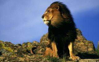7 Days Kidepo & Bwindi Flying Safari