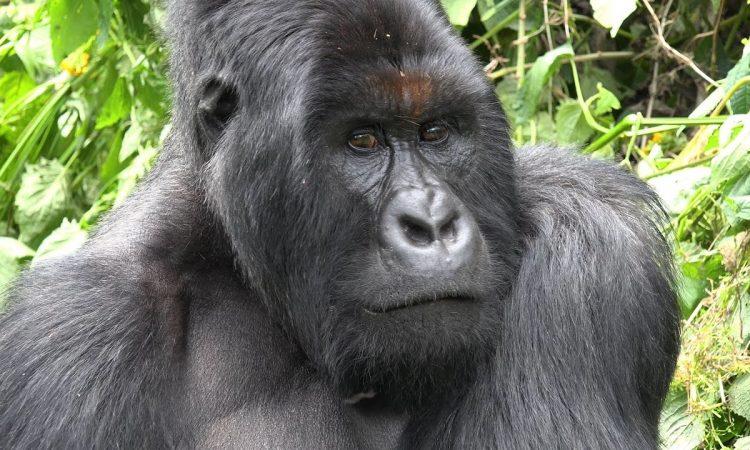 7 Days Virunga Nyiragongo Hike & Tchegera Island tour