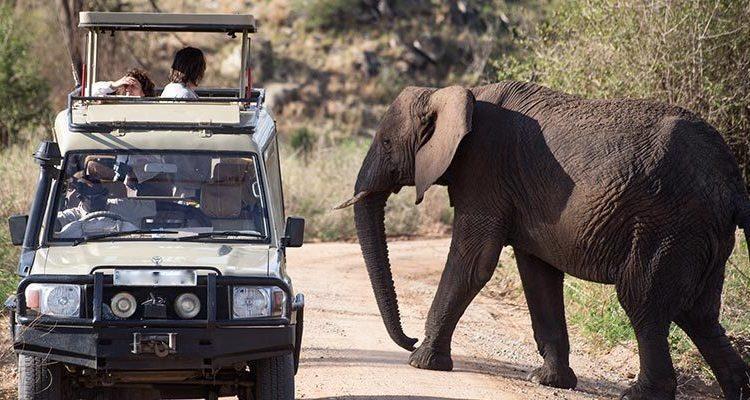 Game Drive in Queen Elizabeth National Park