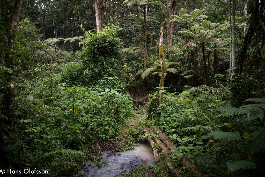 Kalizu Forest