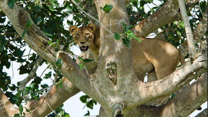 3 Days Queen Elizabeth Park Safari