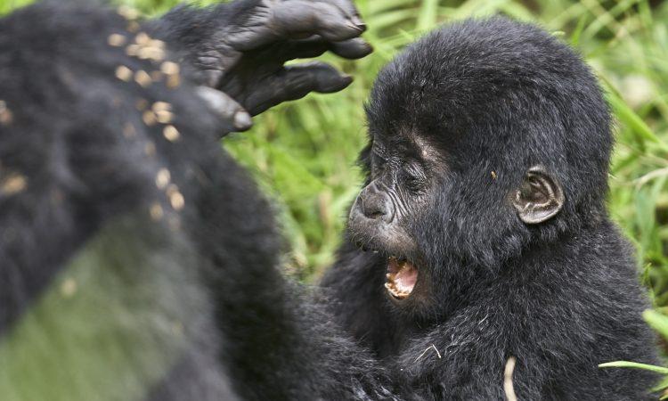 14 Days Rwanda Adventure Safari
