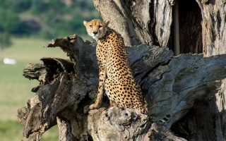 4 Day Kidepo Wildlife Safari