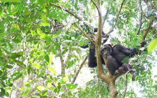 7 Days Ssesse, Ngamba Islands, and Lake Mburo tour
