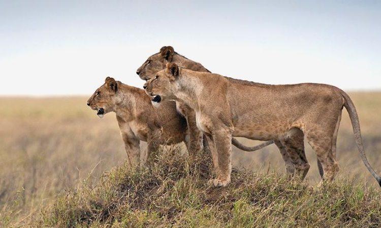 8 days Best of Kenya and Tanzania safari
