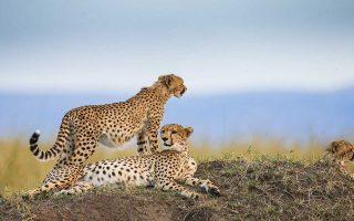 10 Days Kenya and Tanzania Safari