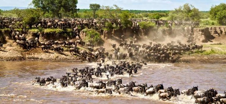 10 Days Best Wildebeest Migration & Rwanda Safari