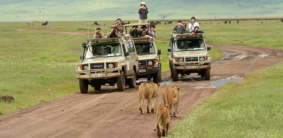 7 days Kenya Tanzania wildlife safari